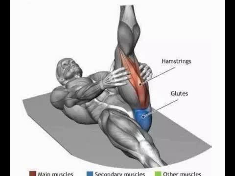 肌肉拉伸解剖图